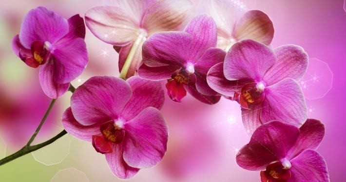 pink flowers for compassion